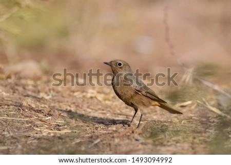 photos of wildlife and wildlife birds #1493094992