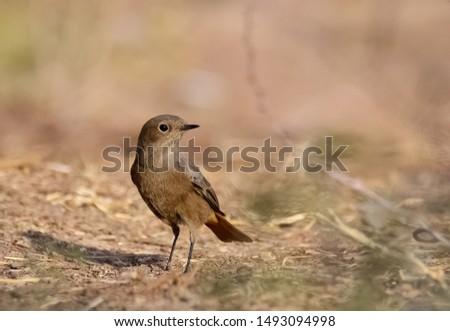 photos of wildlife and wildlife birds #1493094998