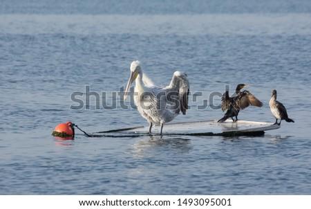 photos of wildlife and wildlife birds #1493095001