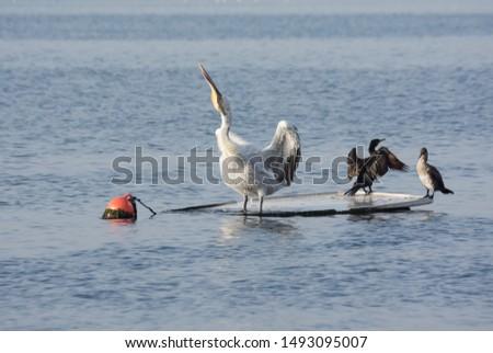 photos of wildlife and wildlife birds #1493095007