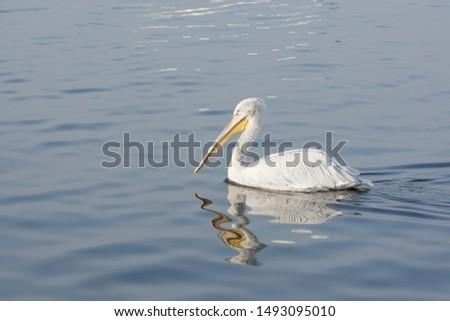 photos of wildlife and wildlife birds #1493095010