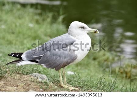 photos of wildlife and wildlife birds #1493095013