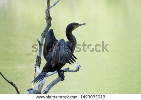 photos of wildlife and wildlife birds #1493095019