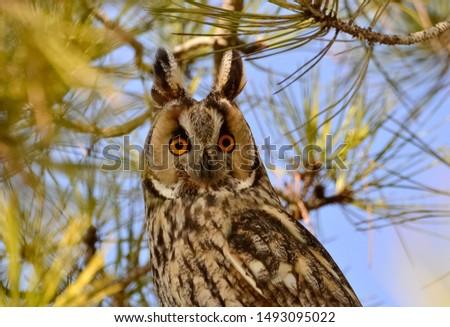 photos of wildlife and wildlife birds #1493095022