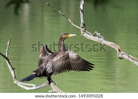 photos of wildlife and wildlife birds #1493095028