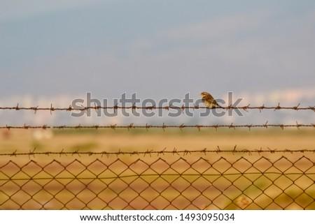 photos of wildlife and wildlife birds #1493095034