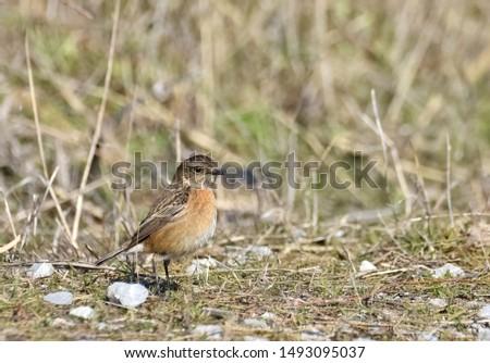 photos of wildlife and wildlife birds #1493095037