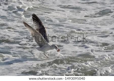 photos of wildlife and wildlife birds #1493095040