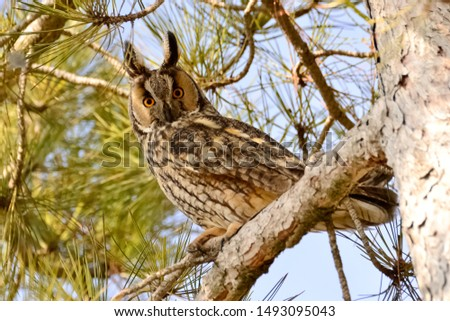 photos of wildlife and wildlife birds #1493095043