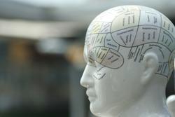 phrenology head statue