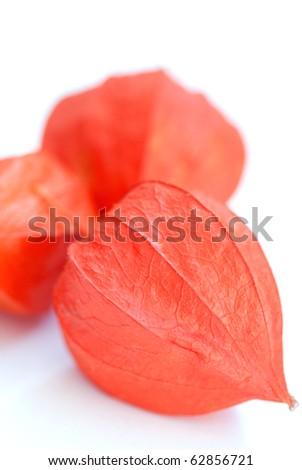 Physalis fruit on white