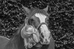 physical therapy for horse, Exercise and regeneration for horses, woman is working with horse for therapy, massage equine in black and white
