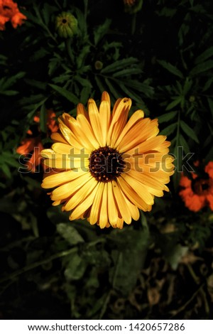 Pic of a yellow flower during the summer time.