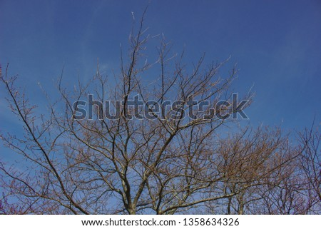pic of tree looking up at blue sky