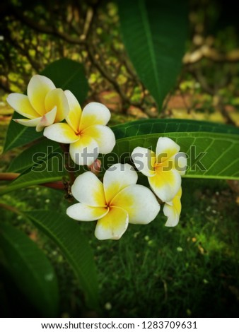 pic of white-yellow flower