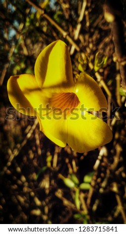 pic of yellow flower