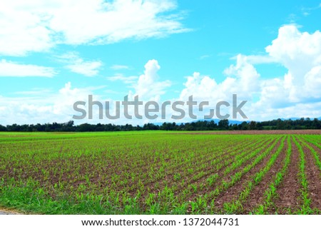 pic show farmers is farming on field with bluesky and mountain, planting concept.