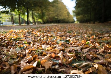 Pic showing the beginning of autumn, the leaves are on the floor and it forms a beautiful natural carpet of a superb copper color