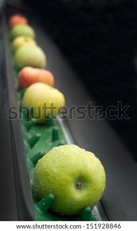 Picked apples on a conveyor belt