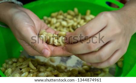 Picking groundnut seeds