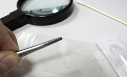 Picking up human hair as evidence of the crime, in the background a magnifying glass and cotton swab and sterile water
