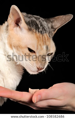 Picky Cat and Food Offered by Hand