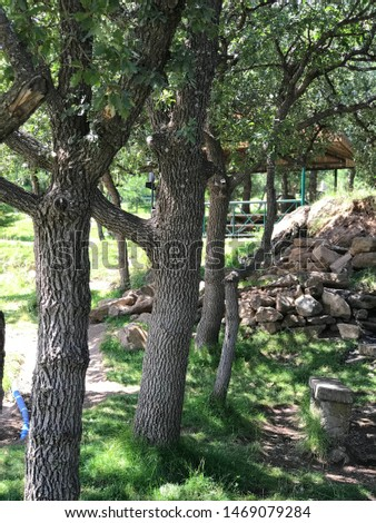 picnic areas and green areas, public natural areas #1469079284