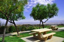 Picnic benches in a park setting