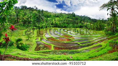 pictorial rice terraces of Bali island