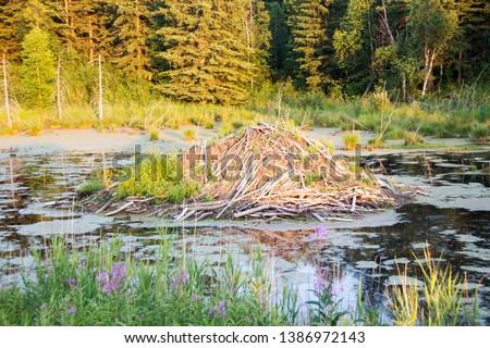 picture of a beaver dam in Elk Island National Park, Alberta, Canada.
