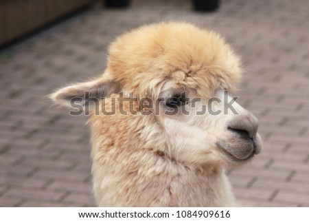 Picture of a child's alpaca's face up