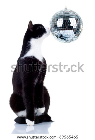 picture of a cute cat playing with a disco ball