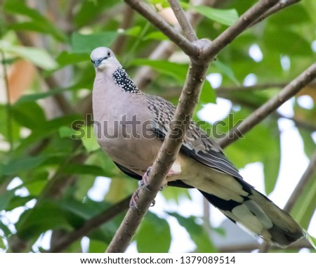 Picture of a dove on a beautiful looking branch
