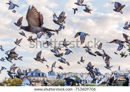 picture of a flying flock of pigeons in Paris, France