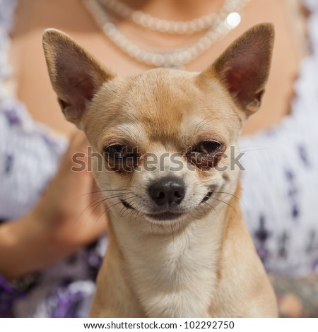 picture of a funny looking dog in front of a woman