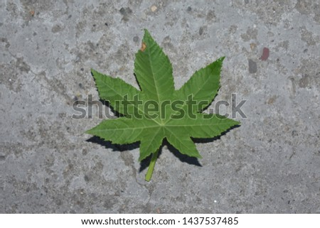picture of a green leaf #1437537485