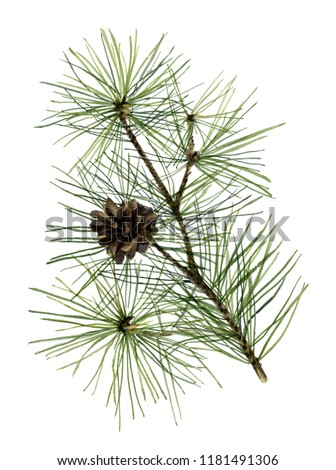 Picture of a green pine branchlet with cone hand painted in watercolor on a white background