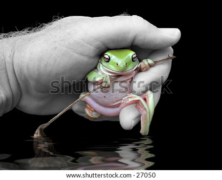 Picture of a green tree frog in a hand over water
