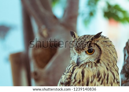 picture of a owl. The owl is watching somewhere