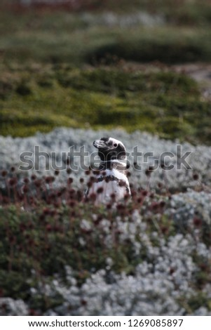 picture of a penguin hiding in the grass in patagonia