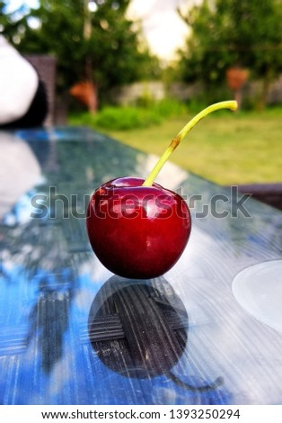 Picture of a ripe and freshly picked cherry in Hunza Valley, Pakistan