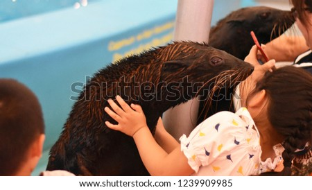 Picture of a seal playing with a young girl.