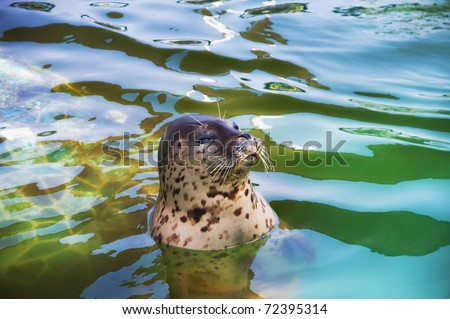 Picture of a seal swimming in  water