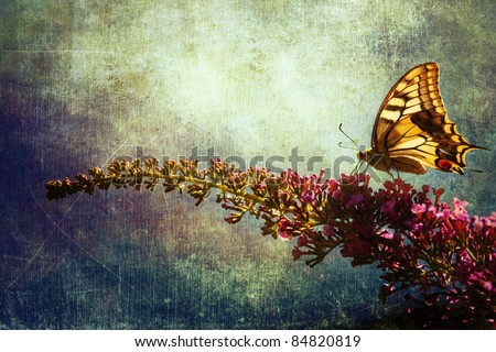 picture of a swallowtail butterfly on a summer lilac blossom overlaid with grunge texture