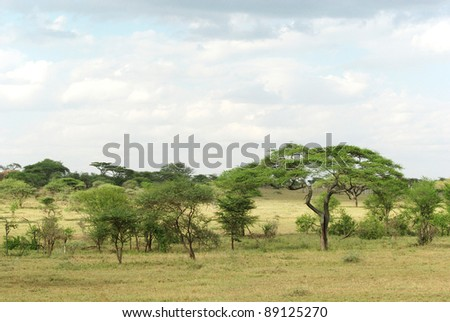 Picture of a typical Serengeti landscape