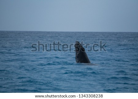 Picture of a whale taken off the coast of Oahu.