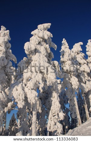 Picture of a winter landscape in Sweden, frost on the trees