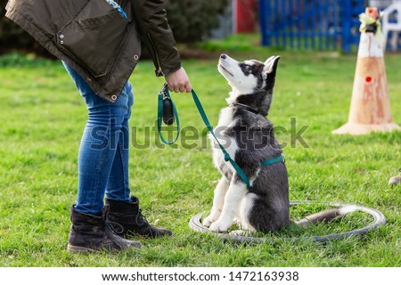 picture of a woman who trains with a young husky on a dog training field Сток-фото ©