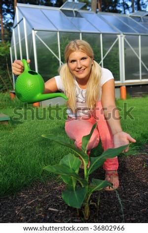 nematanthus gregarius goldfish plant. 2010 woman watering can plant