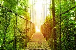 Picture of Arenal Hanging Bridges Ecological reserve, natural rainforest park, La Fortuna de San Carlos city, Costa Rica, Central America, footbridge in jungle, travel and tourism concept